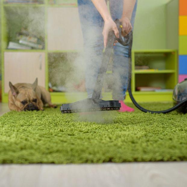 10 formas de eliminar los ácaros del polvo doméstico (Foto Bigstock)