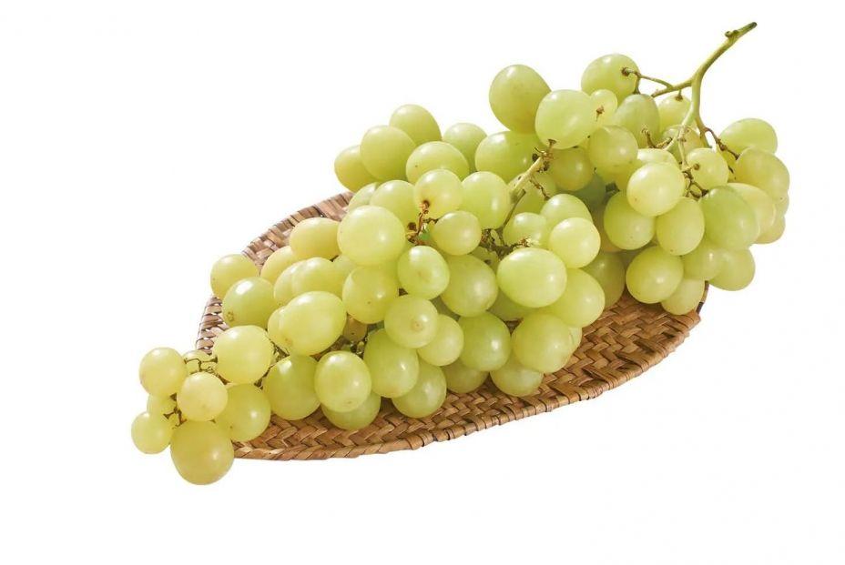 lidl uva