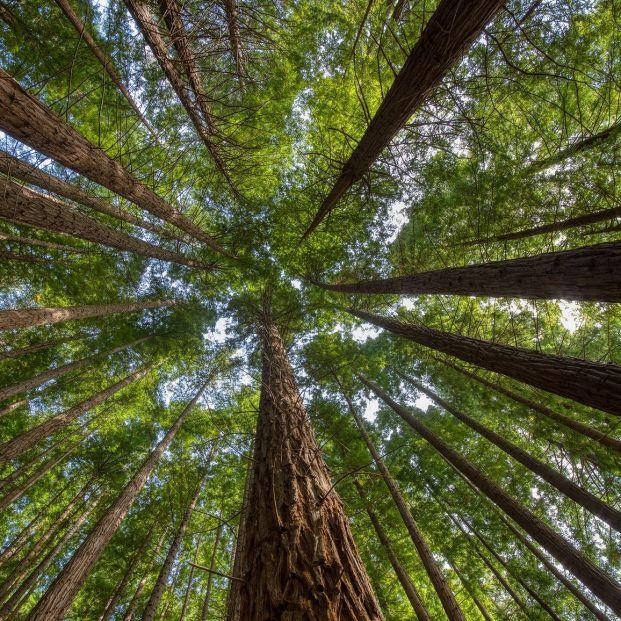 Descubre los espectaculares bosques de Cantabria