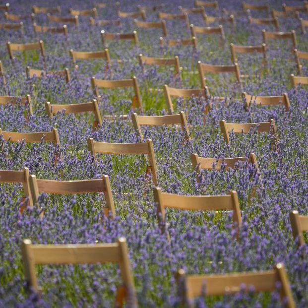 Campos morados de Brihuega acogerán una nueva edición del Festival de la Lavanda (Festival de la Lavanda)