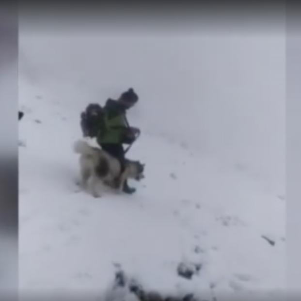Rescatan a un perro en pleno temporal tras un desesperado llamamiento desde las redes sociales