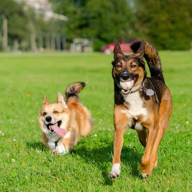 Sigue estos consejos para alargar la vida de tu perro. Foto: bigstock