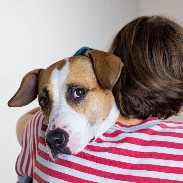 Trucos para que tu perro deje de ser miedoso (Foto Bigstock) 2