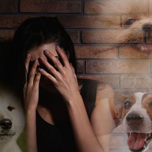 Fobia a los perros, un miedo que suele venir de la infancia (Foto Bigstock)
