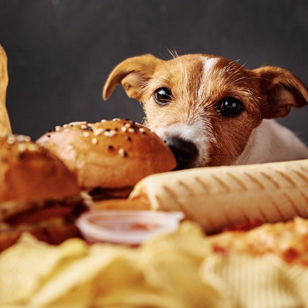 Alimentos tóxicos que nunca debemos dar a nuestro perro