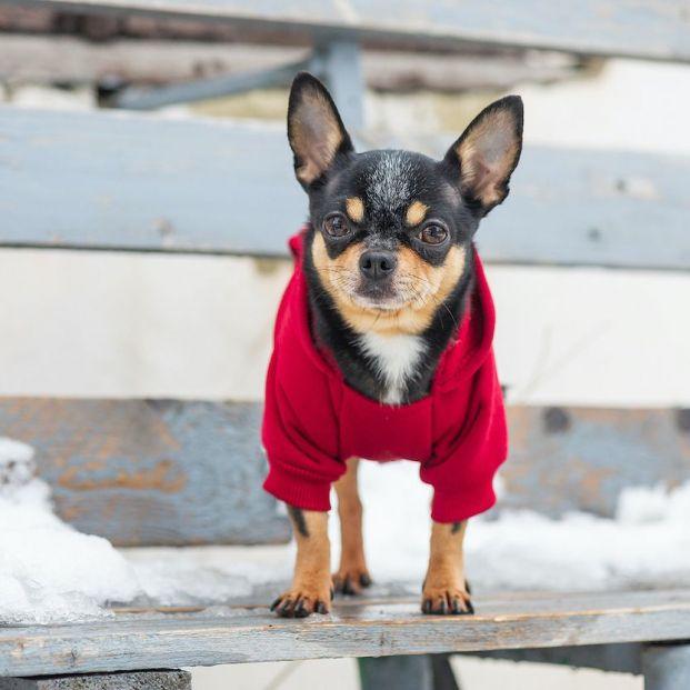 Los perros pasan frío: ¿mito o realidad?