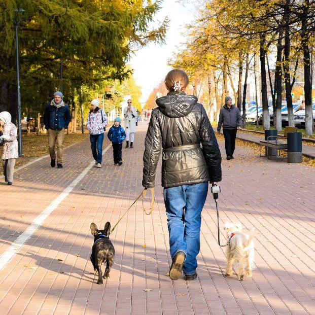 ¿Debemos abrigar a nuestros perros mientras pasean?