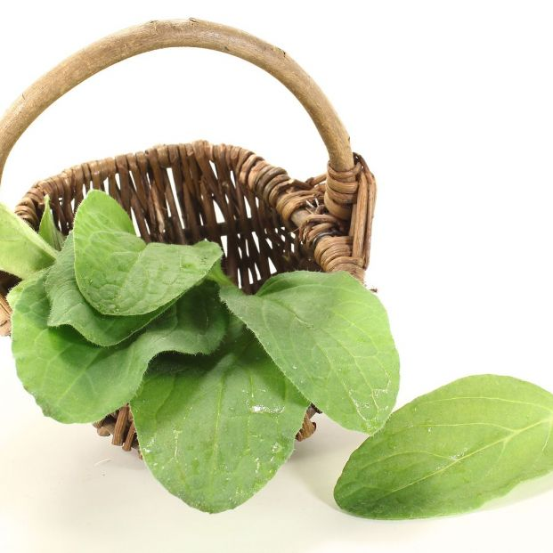 Borraja: te contamos todos los secretos de esta verdura Foto: bigstock