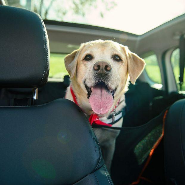 Cómo eliminar el olor a perro de nuestro coche