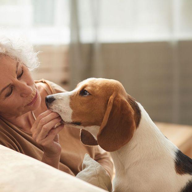 Esta sorprendente habilidad de los perros inspira un dispositivo para la detección precoz del cáncer