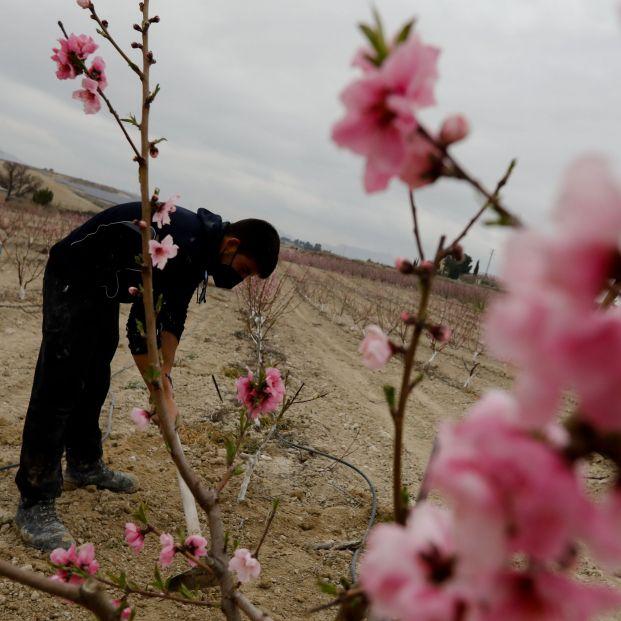 La primavera meteorológica ya ha comenzado y será más seca de lo normal