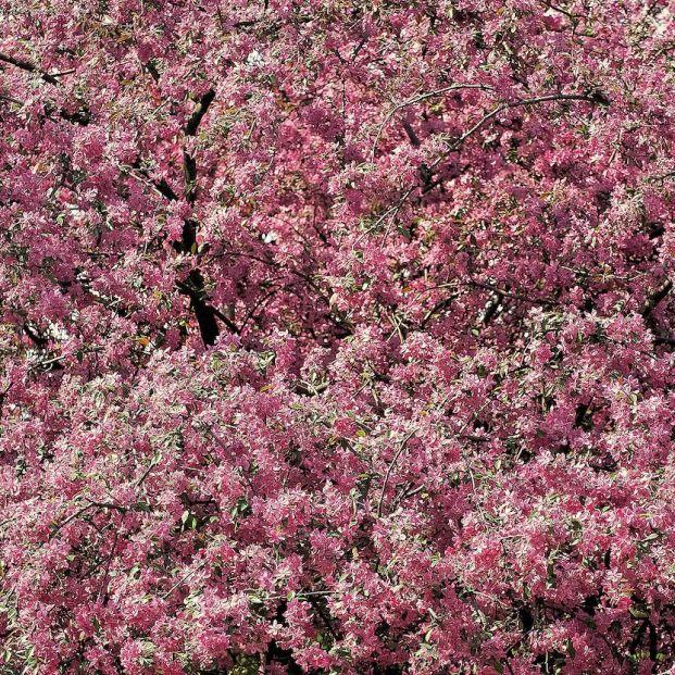 Atención, alérgicos: se espera una primavera explosiva