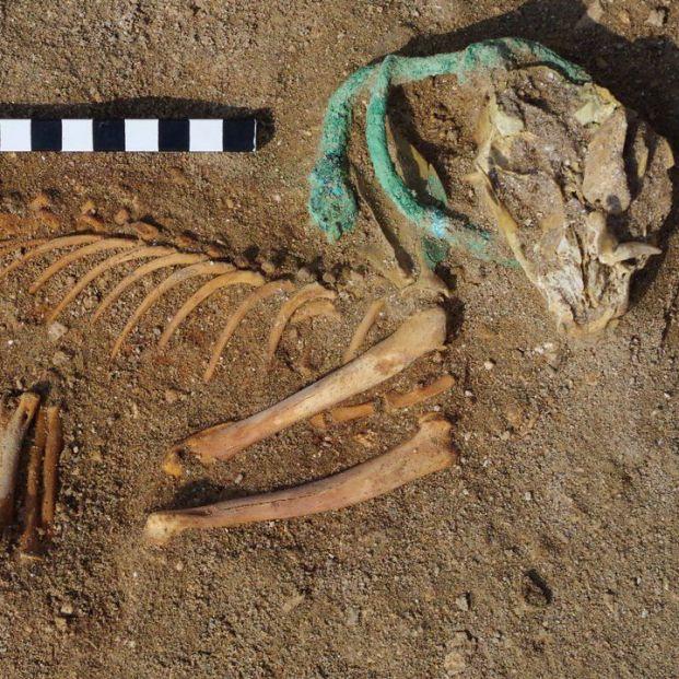 Encuentran en Egipto el cementerio de mascotas más antiguo del mundo
