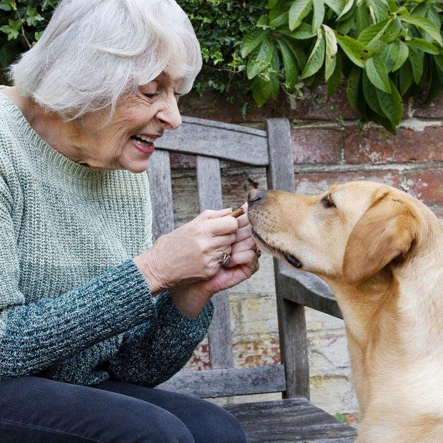 Un estudio revela que es habitual que los dueños contagien de Covid-19 a sus mascotas (Foto Bigstock)