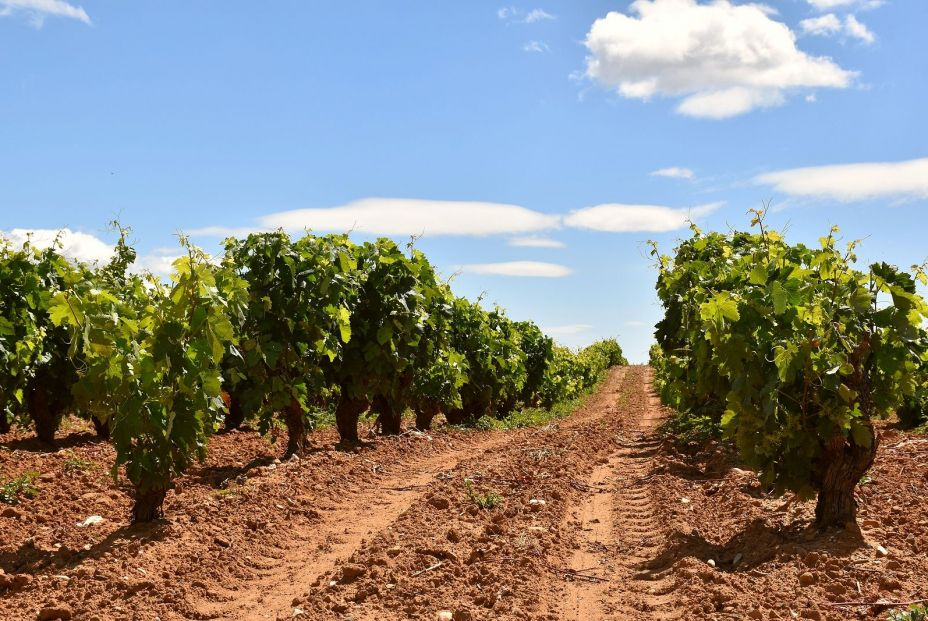 bigstock Photo Of Vineyard Row With Tra 400142774