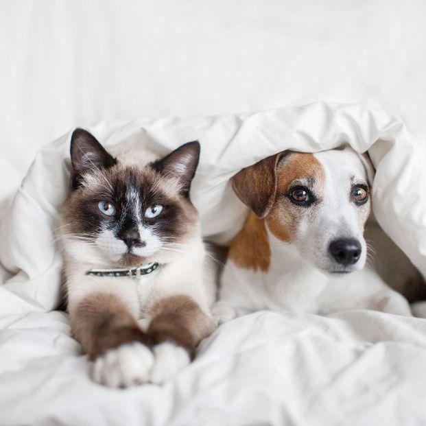 Los perros y gatos son muy diferentes (bigstock)