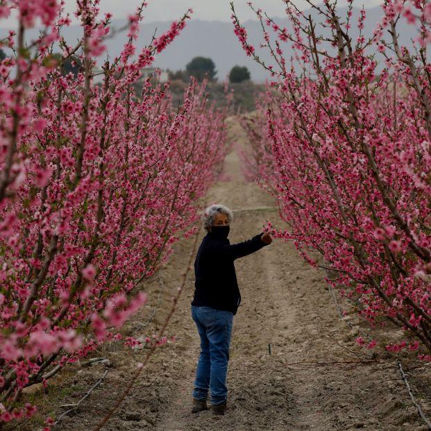 La primavera arranca este sábado a las 10:37 y tendrá una duración de 92 días y 18 horas