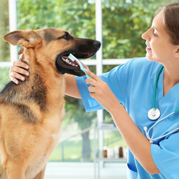 Problemas bucodentales en perros (bigstock)