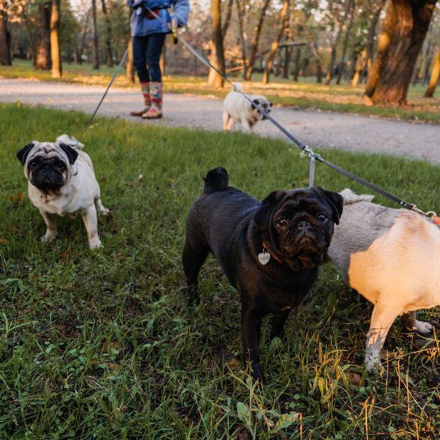Máxima preocupación por las trampas con alfileres para perros