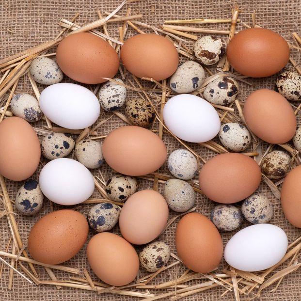 ¿Huevo de gallina o de codorniz? Foto: bigstock