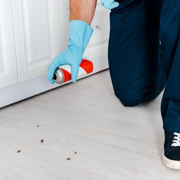 Cómo acabar con los insectos que aparecen en la cocina