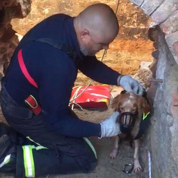Descubren una mina abandonada donde se lanzaban perros de caza para que murieran