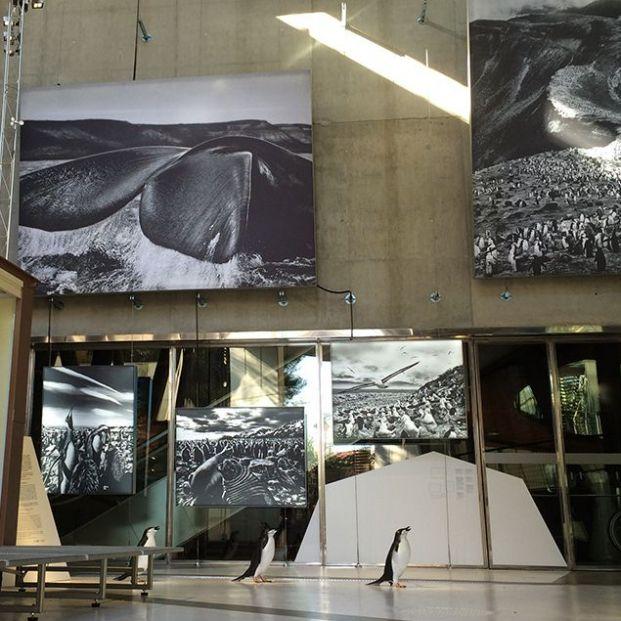 Exposicion la Antartida en Cosmocaixa, uno de los museos a los que ir con nietos (cosmocaixa.es)
