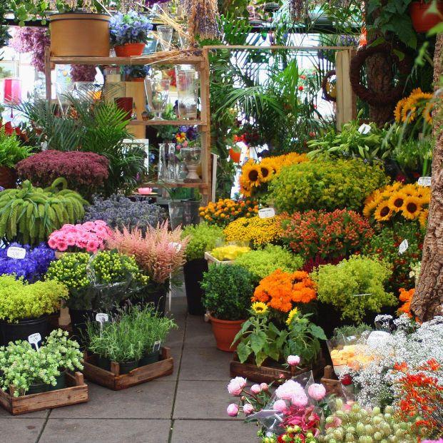 Recorrido por algunas de las floristerías más bonitas y espectaculares de España