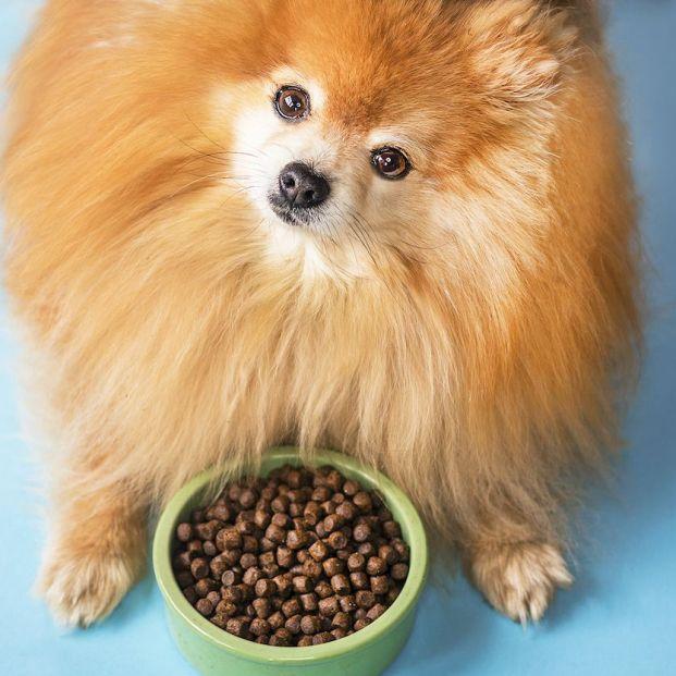 Por qué tu perro no quiere su comida y qué hacer