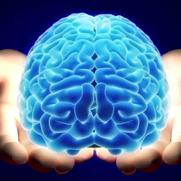 Muchas de las actividades atribuidas a la corteza se generan en otras partes del cerebro