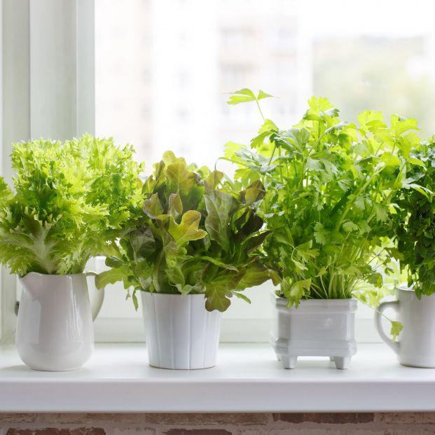 Hierbas aromáticas en conservación (bigstock)