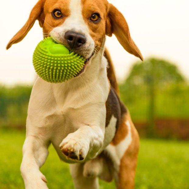 ¿Cómo funciona Gudog? La aplicación que encuentra un cuidador para tu mascota