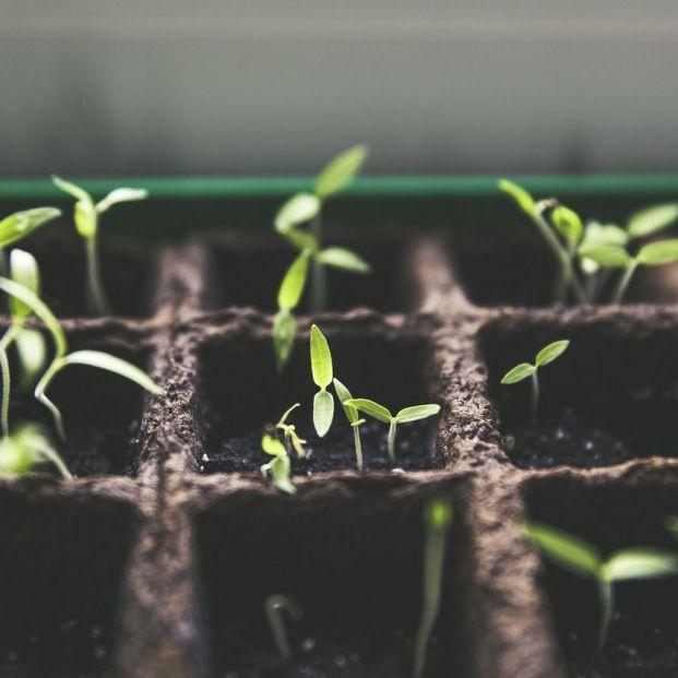 Plantaciones en huertos urbanos (Creative commons)