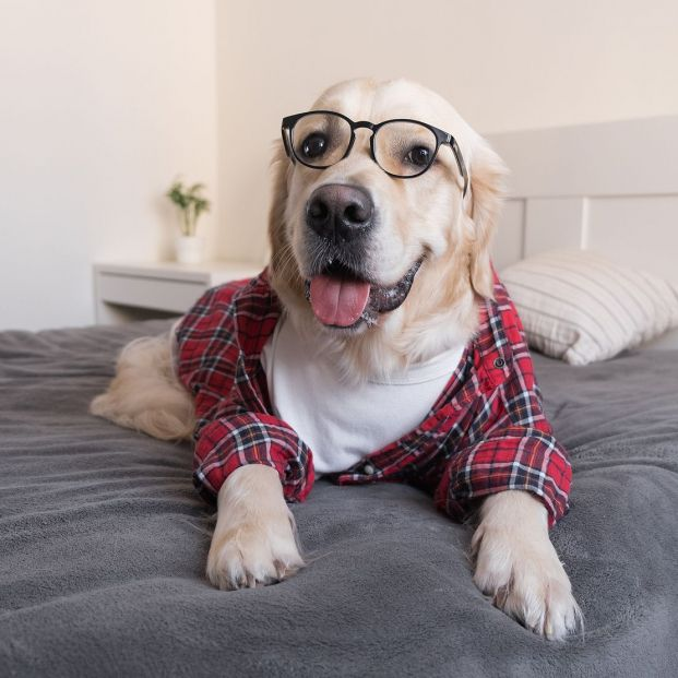 Cómo saber si has humanizado a tu perro y por qué es un error hacerlo