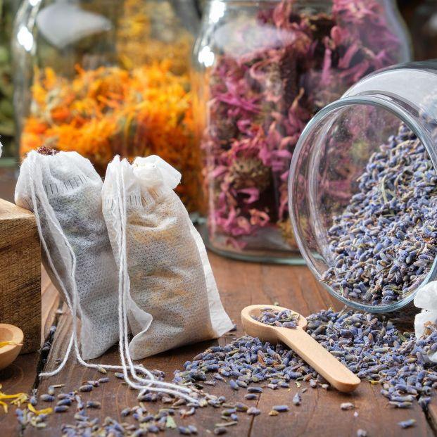 Hormigas, cucarachas, moscas...: consejos para prevenir la aparición de plagas Foto: bigstock