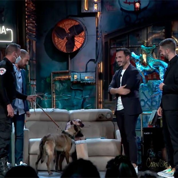 'La Resistencia' lleva a un perro antidrogas y detecta un paquete de porros entre el público