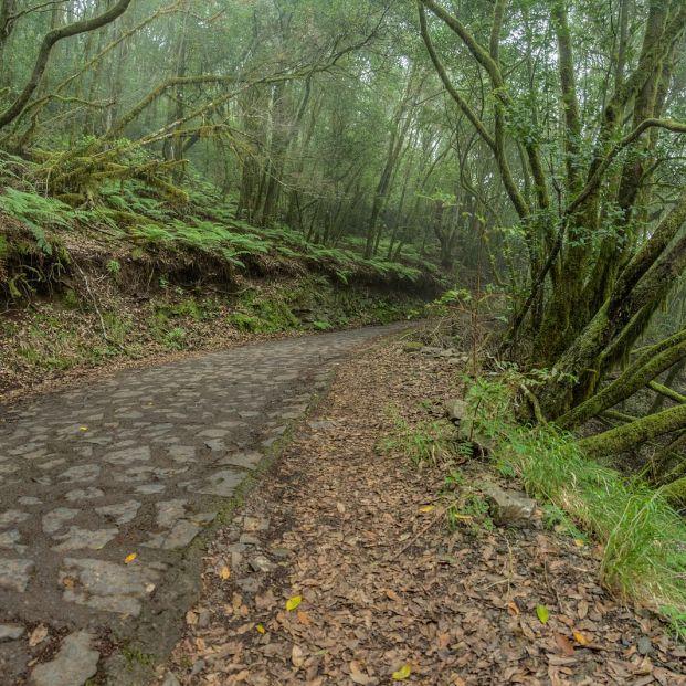 Ruta por los cuatro Parques Nacionales de Canarias. Foto: bigstock