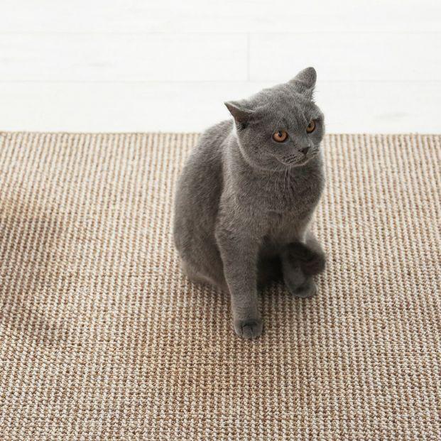 ¿Tu gato orina fuera del arenero? Conoce los motivos y cómo solucionarlo