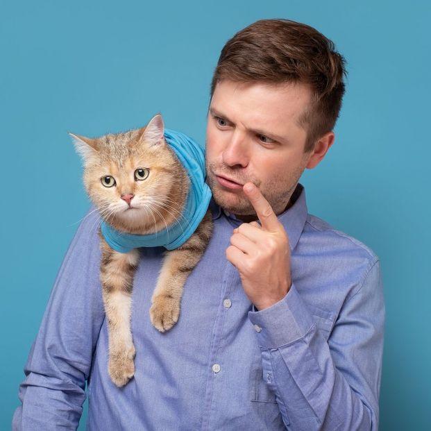 Cómo reñir a un gato para corregir malas conductas
