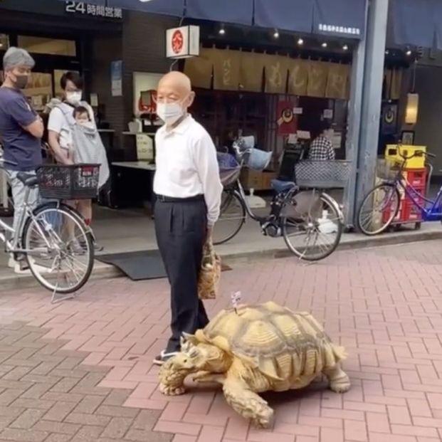 Bon-chan, la tortuga gigante que anima a los clientes de una funeraria en Tokyo