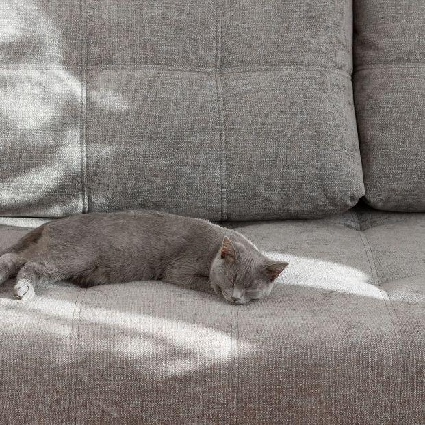Eliminar el olor de pis de gato de una superficie es posible