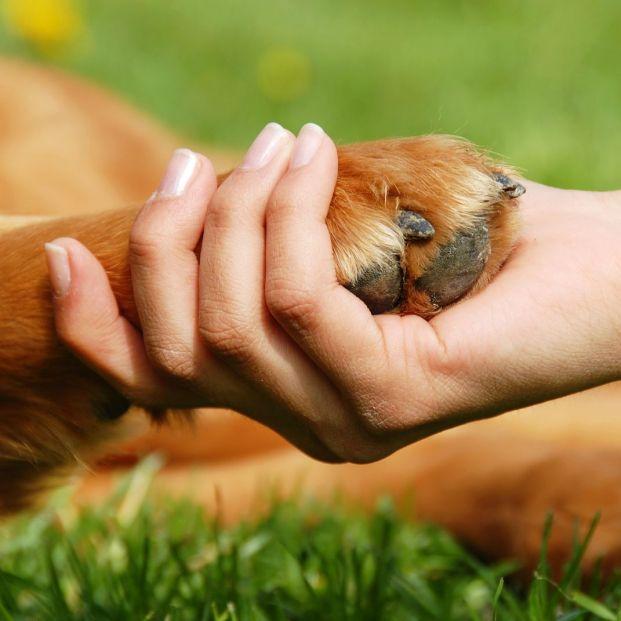 Cuidado de las uñas de tu mascota (bigstock)