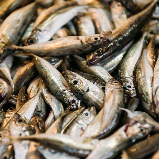 Disfruta de las anchoas con estas recetas. Foto: bigstock