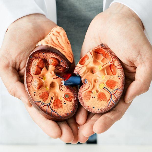 Consejos para tener unos riñones sanos