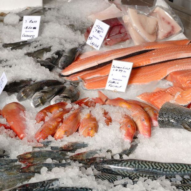 Cuida de tu salud comiendo varios tipos de pescado