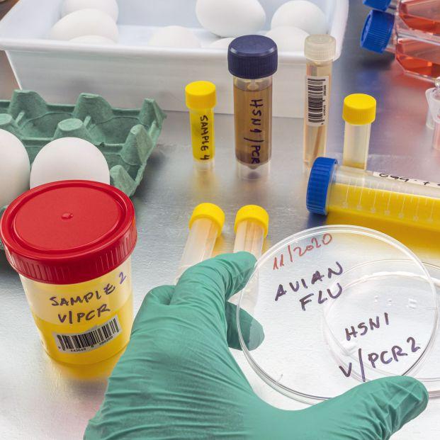 China detecta el primer caso de gripe aviar en humanos