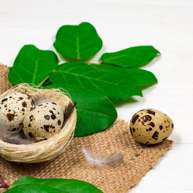 Trucos para pelar huevos de codorniz con facilidad Foto: bigstock. huevos de codorniz