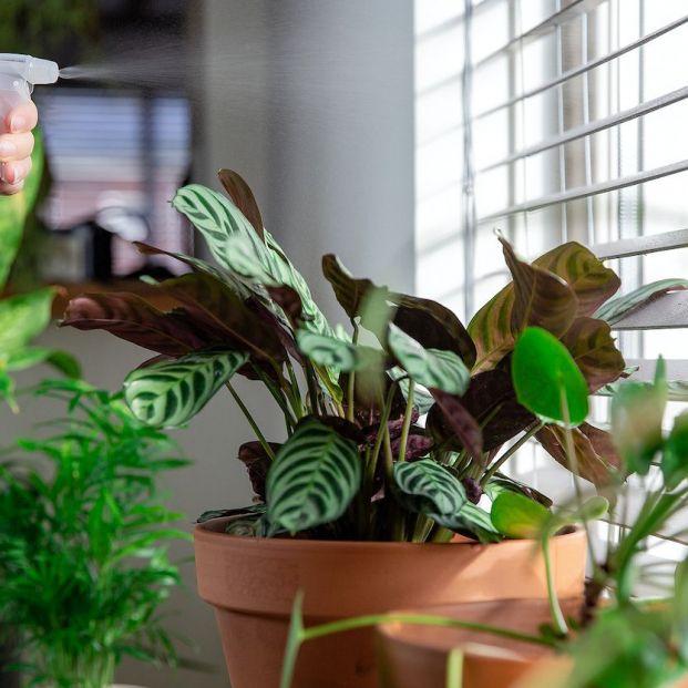 Cómo regar las plantas cuando te vas de vacaciones: trucos que sí funcionan