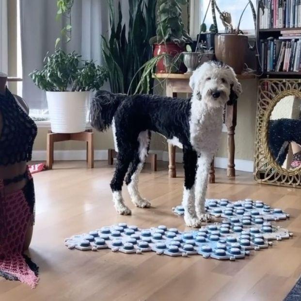 Bunny, la perra que su dueña ha entrenado para 'hablar' que arrasa en TikTok