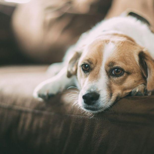 ¿Cómo fortalecer el sistema inmunitario de tu mascota?